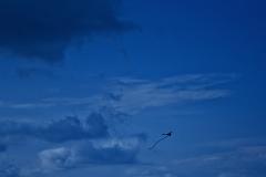 Go-fly-a-kite-1