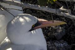Bird-of-the-Galapagos-3