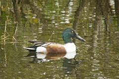 Ducks-are-people-too-1
