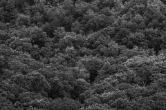 Black-and-White-Pix-53