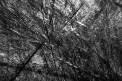 Black-and-White-Pix-54