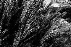 Black-and-White-Pix-56