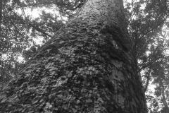 Black-and-White-tree-1