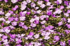 Flowers-1-1