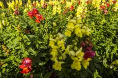 Flowers-3-1
