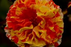 Flowers-I-love-1