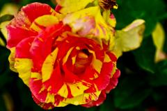 Flowers-I-love-4
