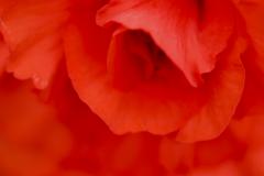 Flowers-I-love-5
