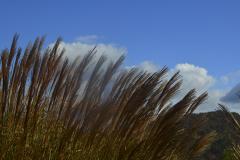 Sawgrass-1