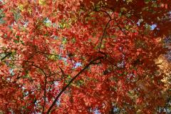 Fall-in-the-Blue-Ridge-Mountains-1-1