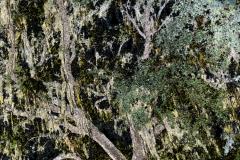 Petrified-tree-1-1