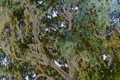 Petrified-tree-1