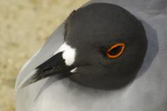 Birds-of-the-Galapagos-1