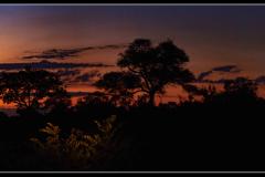 African-Night-1