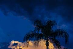 Palm-at-night-1