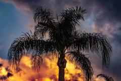 Palm-at-night-2-1