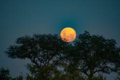 Moon-10-1