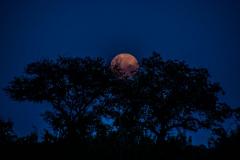 Moon-9-1