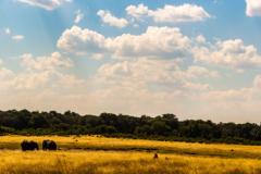 Africas-beauty-The-Savannah-1