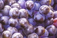 Pre-processed-wine-1