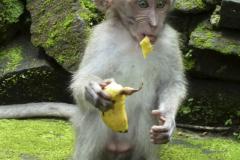 My-banana-1