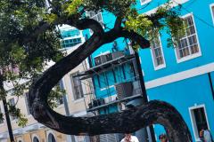 A-unique-tree-1